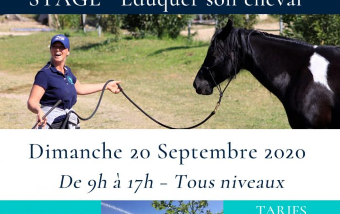 stage-journee-education-cheval-haras-pennafort-caillan-var-draguignan